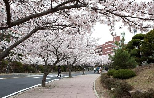 Học tiếng Hàn Quốc tại Silla University, thành phố Busan