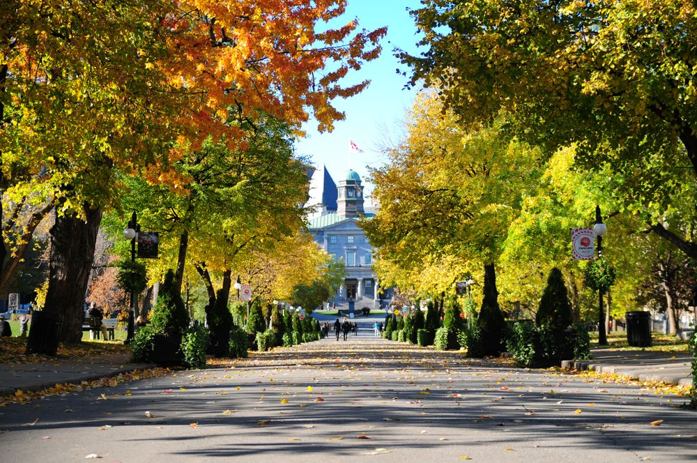 McGill University - Ngôi trường được mệnh danh