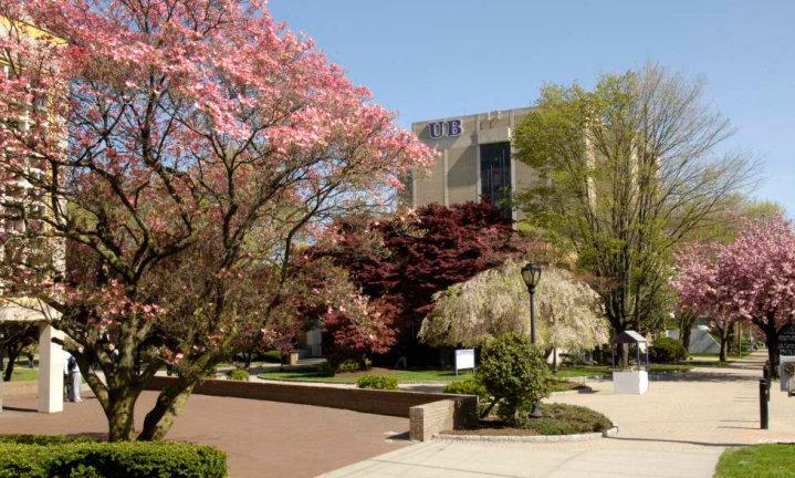 Trường Đại học Bridgeport - University of Bridgeport (UB)